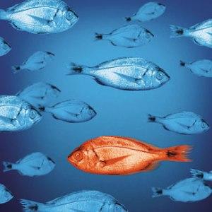 acceptance fish